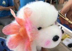 店铺宠物美容师—实操染色