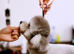 店铺实用宠物美容师
