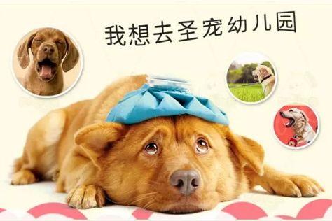 千亿级宠物市场盈利新风口!圣宠宠物幼儿园上线!