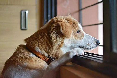 万家争宠,一园独秀!北京通州圣宠宠物幼儿园开业!