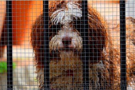 宠物寄养事故多发,铲屎官如何才能照顾好春节不能带回家的主子?