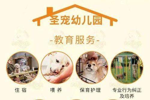 """北京宠物寄养攻略丨春节离家给主子们找个靠谱的""""家""""!"""