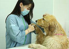店铺宠物美容师—实操洗澡