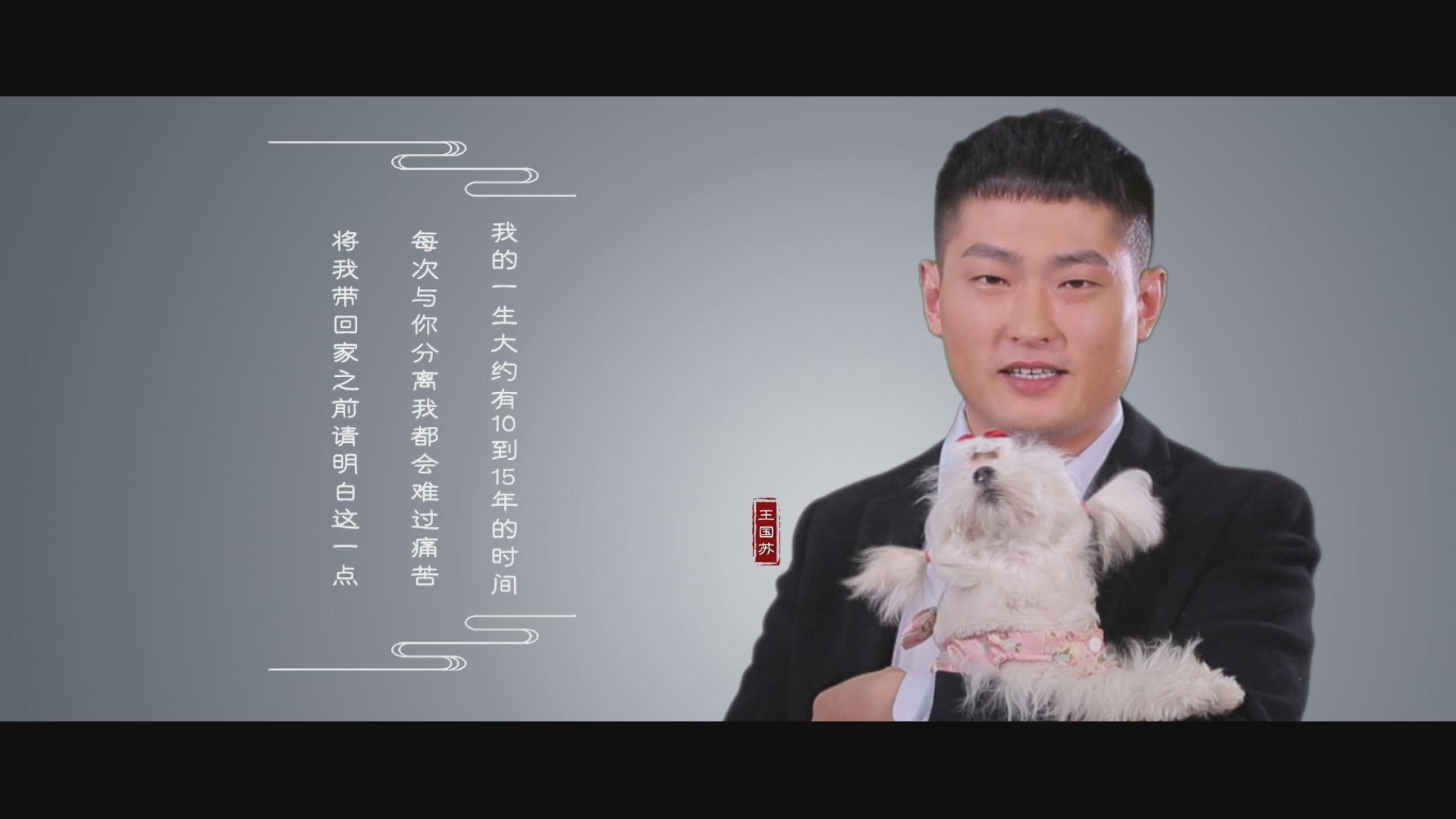 超燃!宠物行业助力中国梦,超强阵容公益片《中国梦宠物梦》