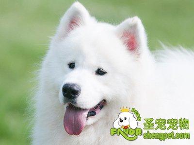 狗是群居动物,它们与人类有相似的社交
