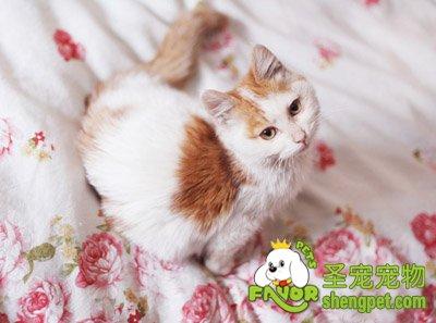 如何让猫咪学会独处?可以用什么方法?