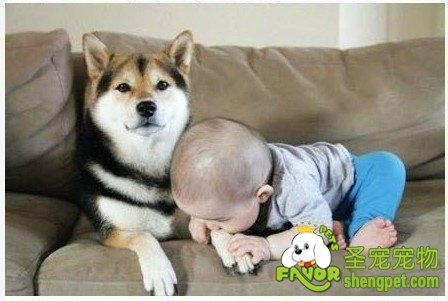 孩子养宠物也是有好处的
