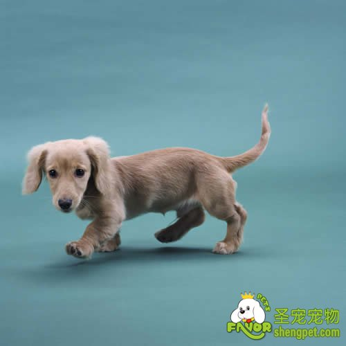 幼犬适应新环境的时候该如何照看