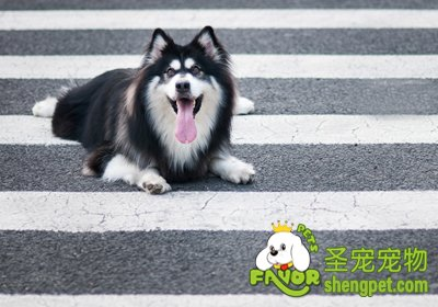 治疗狗狗犬瘟的偏方