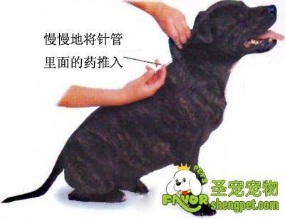 动物组织石蜡切片步骤