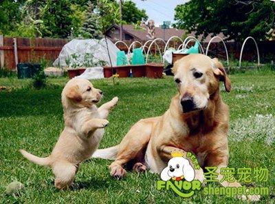 照顾生产后狗妈妈与宝宝的注意事项