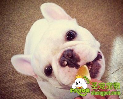 关于狗狗吃水果的注意事项