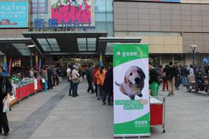 宠物公益活动