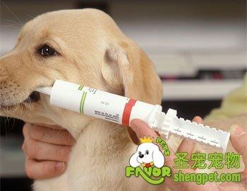 狗狗传染病的预防措施