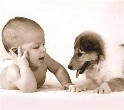 可爱的宝宝配上呆萌的狗狗